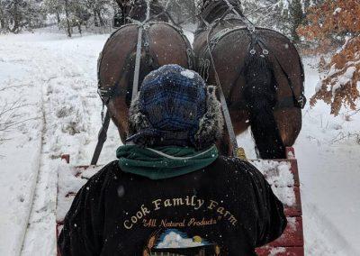 horse drawn sleigh rides 1