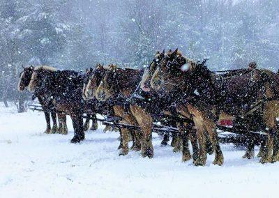 horse drawn sleigh rides 2