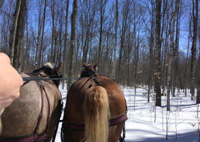 horse drawn sleigh rides 3