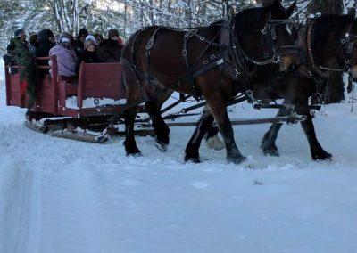 horse drawn sleigh rides 4