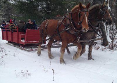 horse drawn sleigh rides 6