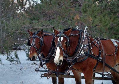 horse drawn sleigh rides 7
